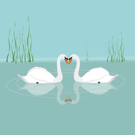 Two white swans Иллюстрация