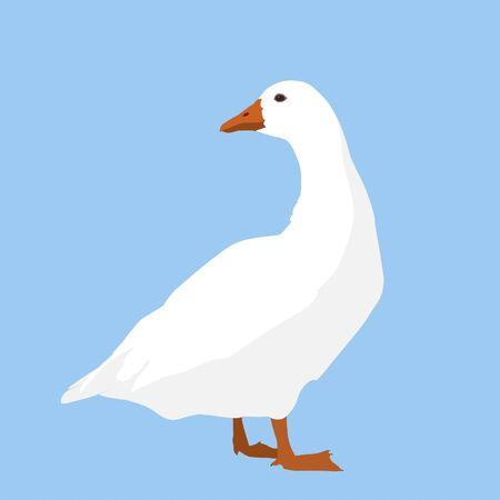 A white goose