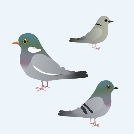 Three different kind of pigeons
