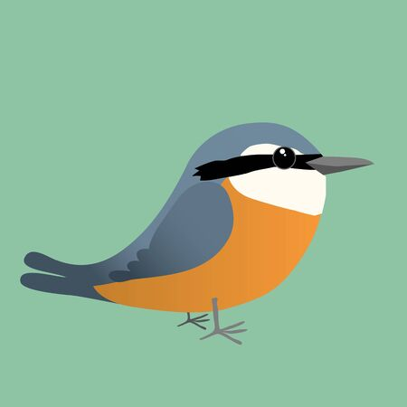 An European nuthatch comic illustration
