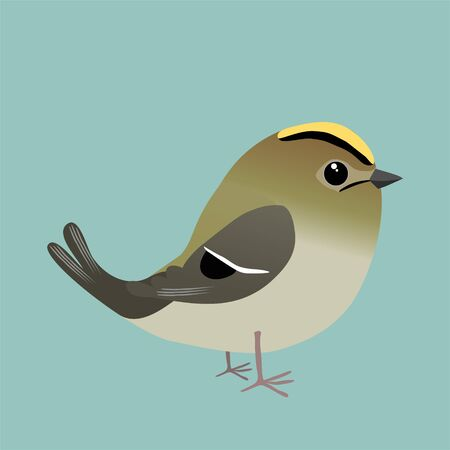 A goldcrest cartoon illustration on a blue background