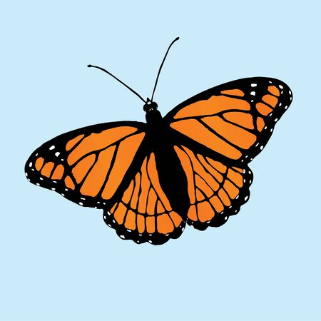 A vector illustration of a viceroy butterfly slightly slanted Ilustração