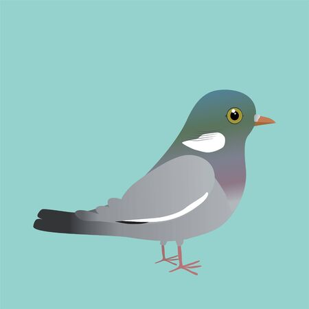 Common wood pigeon illustration on a blue background