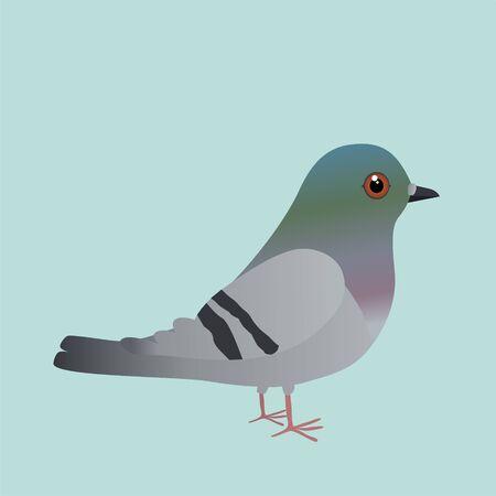 A cute pigeon cartoon illustration