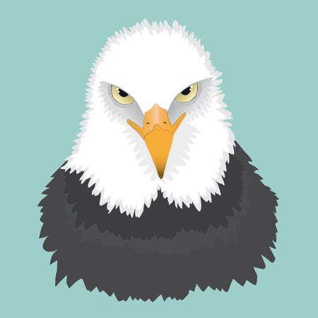 A portrait of a bald eagle. You see him from the front and he is looking angry.