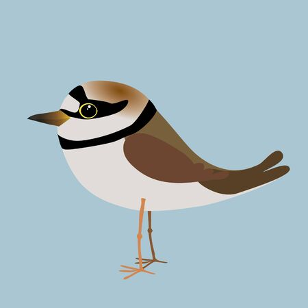 A vector illustration of a little ringed plover.