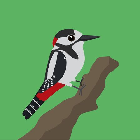 A vector illustration of a great spotted woodpecker on a tree trunk with a green background