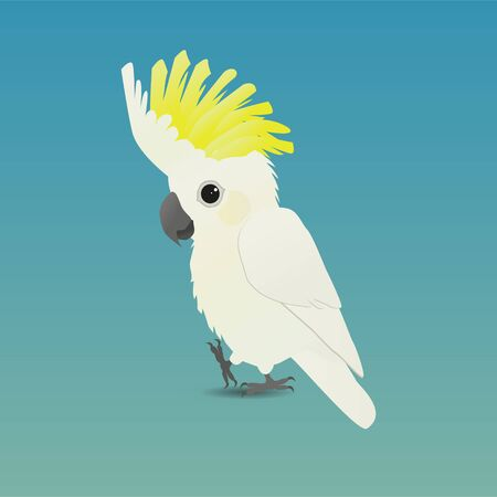 An illustration of a cute Sulfur-crested Cockatoo