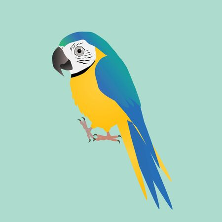 Funny blue and yellow macaw 矢量图像