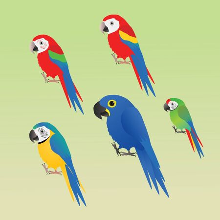 A collection of five different species or macaw