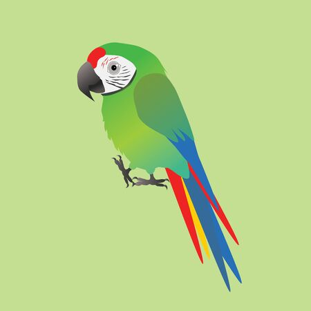 An illustration of a funny and cute military macaw Ilustração