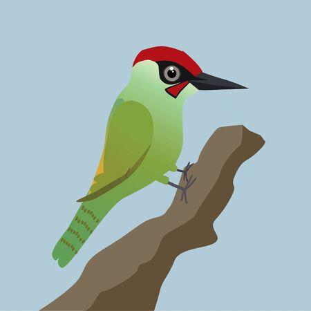 A vector illustration of a green woodpecker on a tree trunk with a blue background 일러스트