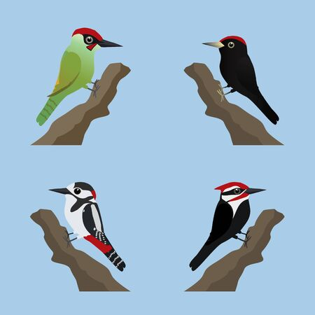 A collection of four different species or woodpeckers. Cute cartoon style.