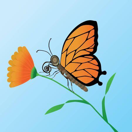 Orange butterfly on an orange flower