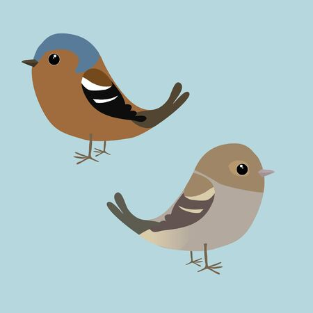 A couple of cute finches illustration. It is a male and a female bird