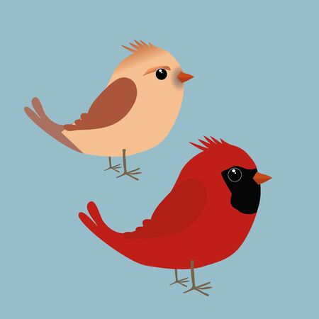 A couple of cute northern cardinals illustration. It is a male and a female bird 矢量图像