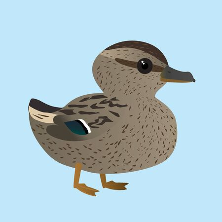 A vector illustration of a of very cute mallard. It is a female duck.