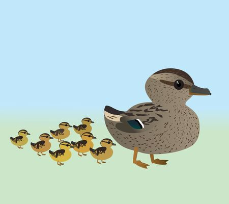 A vector illustration of a of very cute mallard and her chicks. It is a female duck with seven ducklings.