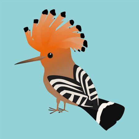 An illustration of a cute Eurasian hoopoe on a soft blue background. Ilustração
