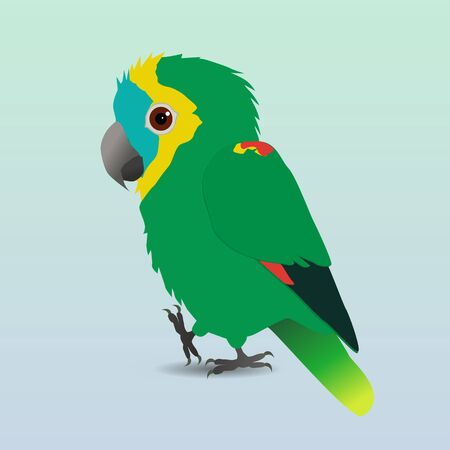 A digital vector drawing of a cute Turquoise-fronted amazon parrot. He's holding one paw up