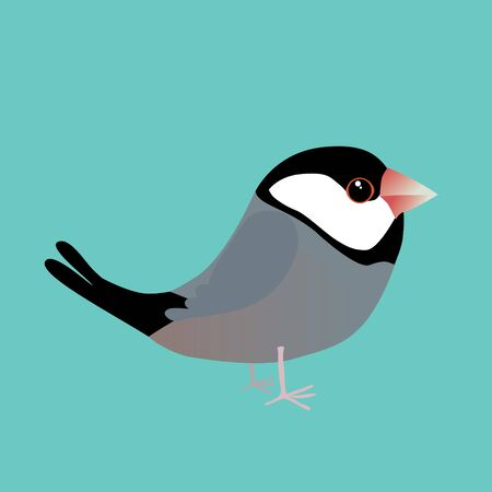 A digital vector illustration of a cute java sparrow. Comic cartoon style. The background is turquoise. 矢量图像