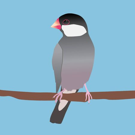 A digital vector illustration of a java sparrow. He is sitting on a long branch. Blue background