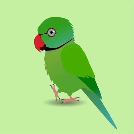 A digital vector drawing of a cute Indian ringneck parakeet. Is a green one. He's holding one paw up. Very cute