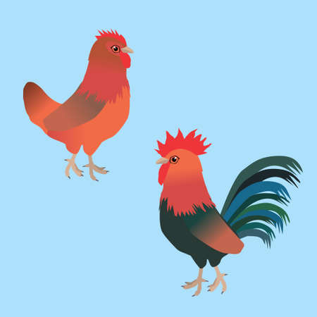 A vector illustration of a couple of chicken. It is a hen and a rooster of the breed Welsumer.