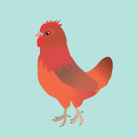 A vector illustration of a chicken. It is a hen of the breed Welsumer. The background is aqua