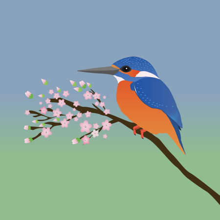 A digital vector drawing in of a kingfisher. The kingfisher sits quietly on a branch with pink blossom The background is a blue green gradient