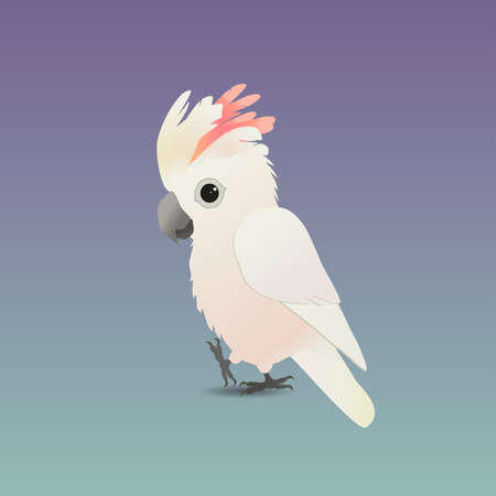 An illustration of a cute salmon-crested cockatoo