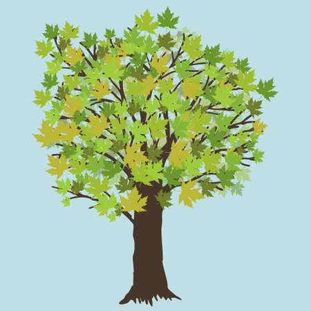 A vector illustration of a maple tree during summer. The tree has green leafs.