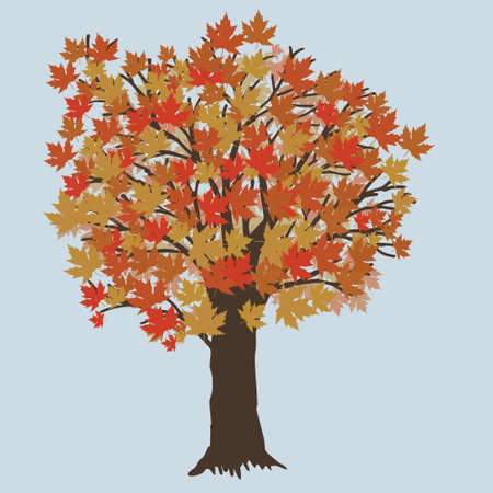 A vector illustration of a maple tree during fall. The tree has orange leafs.