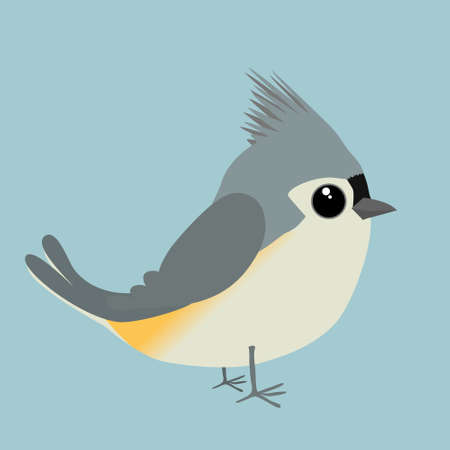 A cute tufted titmouse comic illustration. Cut out on a blue background. 矢量图像