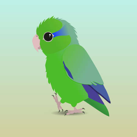 An illustration of a green pacific parrotlet. It's a male bird. Parrotlets are the smallest parrots.