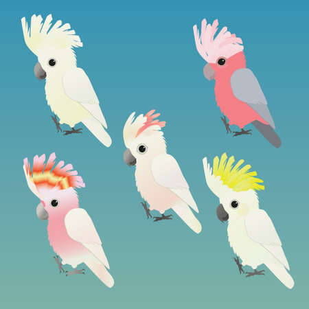 An illustration of five cute different species of cockatoos