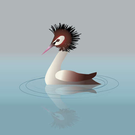 A vector illustration of a great crested grebe swimming in the water.