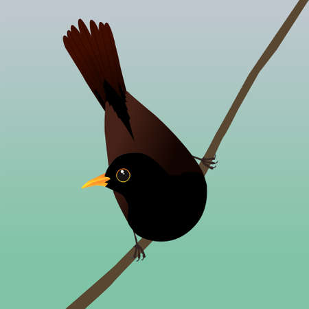 A digital vector drawing of a male blackbird. He sits on a sloping branch and leans forward so his tail points upwards.