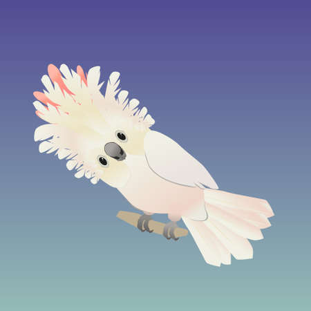 An illustration of a cute salmon-crested cockatoo, His crest is up and he looks friendly at you