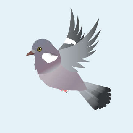 Flying Common wood pigeon illustration on a light blue background