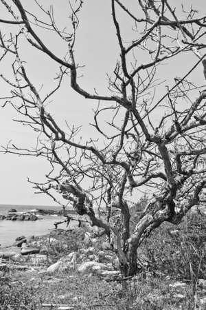 An image of a dead tree near the sea photo