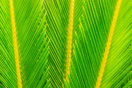 Close up of green palm tree leaves photo