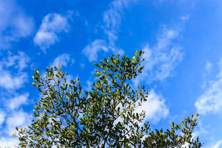 Green leaves on blue sky, can be background. photo