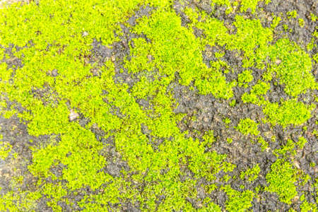 Texture from Green Moss on concrete floor photo