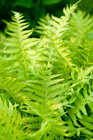 Fresh green fern leaves nature background photo