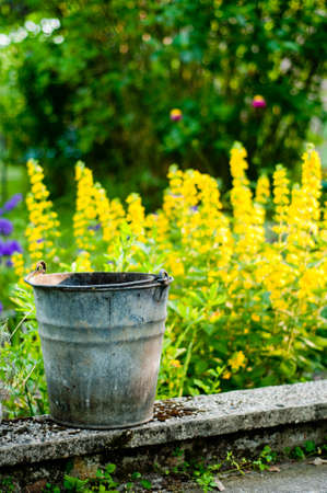 garden background - the foreground old bucket photo