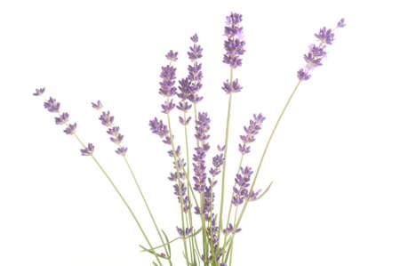 Fleurs de lavande isol? sur fond blanc Banque d'images - 20786958