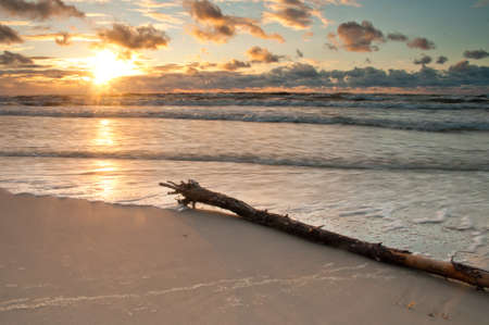 sunrise on beach with branch in foreground photo