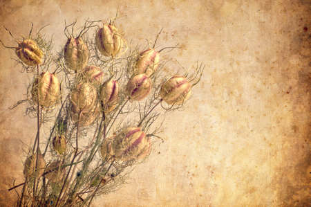 Textured old paper background with flowers Stock Photo