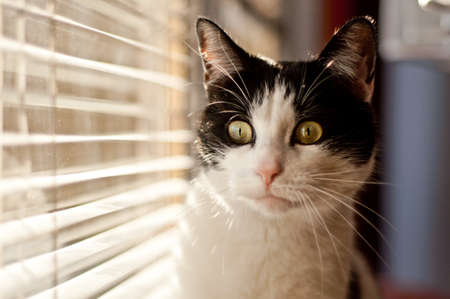Cat looking at the window photo
